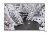 winter_bridge.jpg