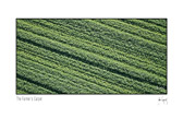 Farmer_Carpet_card.jpg