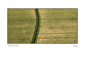 Farmer_Path_card.jpg