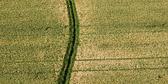 Farmer_path.jpg
